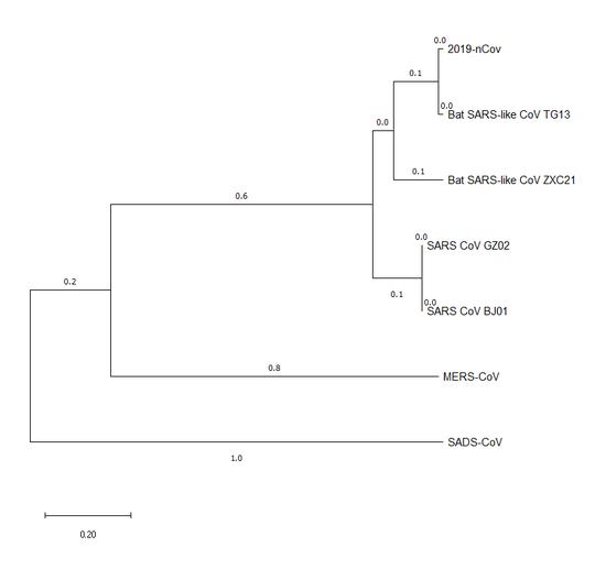 图2:2019-nCoV spike protein与其它冠状病毒spike protein的进化树