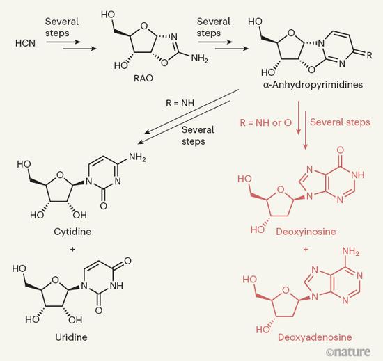 模拟早期地球化学的实验产生了2栽核糖核酸构件和2栽脱氧核糖核酸构件