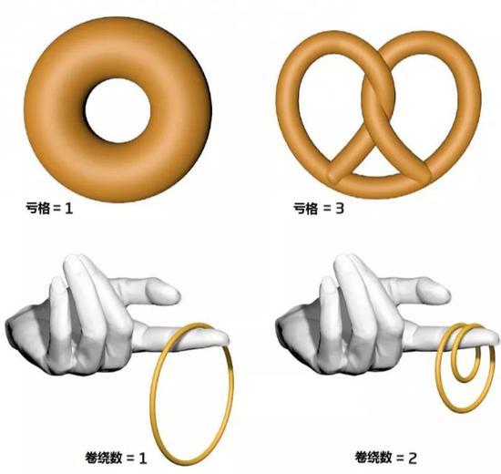 """挤压一枚甜甜圈(或右侧的小饼干)会改变其几何形状,但洞的数量不变。在拓扑学中,这一性质被称为""""亏格""""。"""
