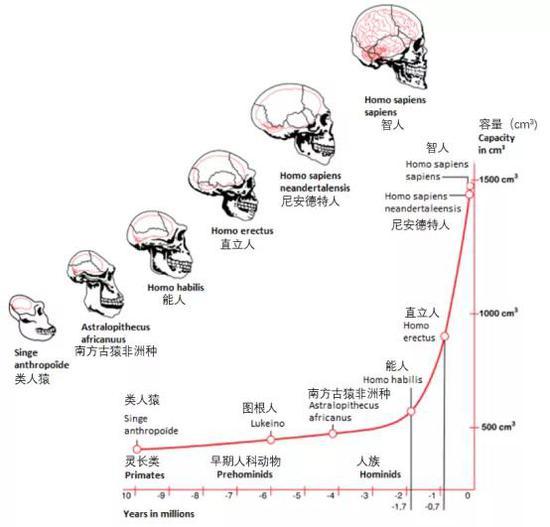 基于古灵长类动物和早期原始人化石颅骨内,铸型所示的人类进化,横坐标示年代,纵坐标示脑容量。图来自:https://doi.org/10.15761/imm.1000287