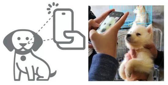 旷视科技犬只鼻纹识别身份认证