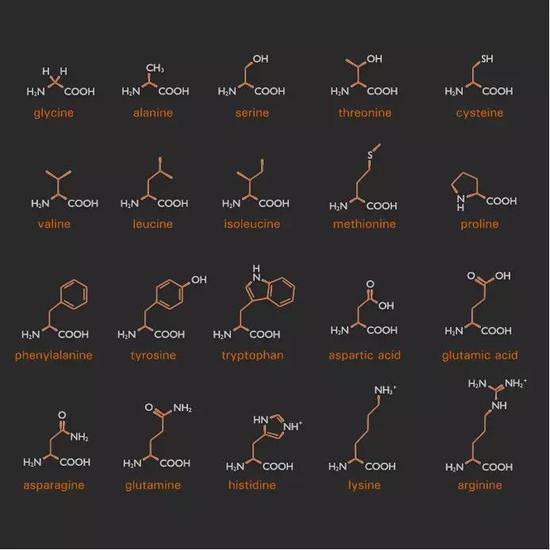 图:就是这20栽氨基酸,构成了地球上所有生物的蛋白质