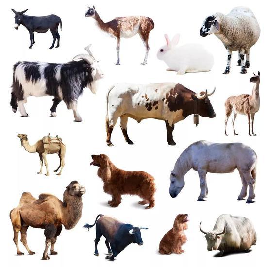 现存绝大大都哺乳动物都归于真兽类(图片来源于网络)