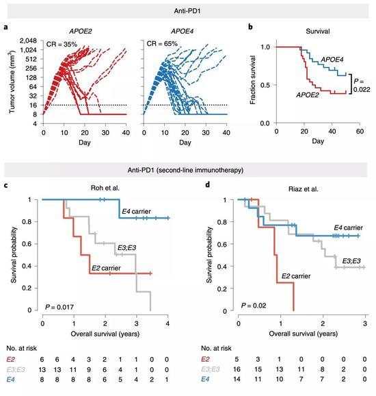 ▲APOE亚型对免疫治疗效果的影响