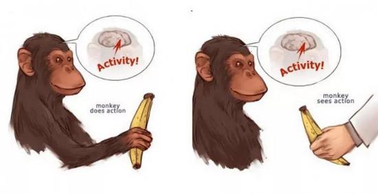 镜像神经元将动作内在化( 图片来源:psu.edu)