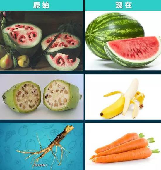 """图1 食物的""""进化"""""""