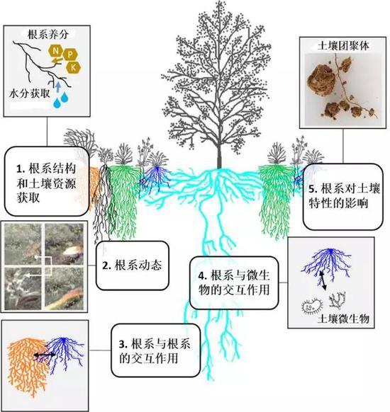 图3。 根系生态5大科学前沿暨根系分泌物的功能延展