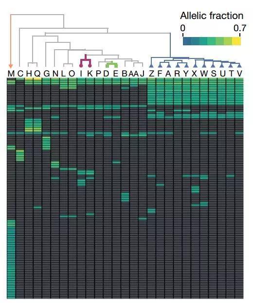 各个细胞株中的单点突变