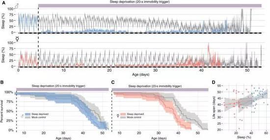 实验结果发现,失去睡眠基本对于果蝇来说基本不致命 图源:Science