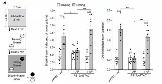 ▲清除衰老细胞可以改善动物的认知能力(图片来源:参考资料[1])