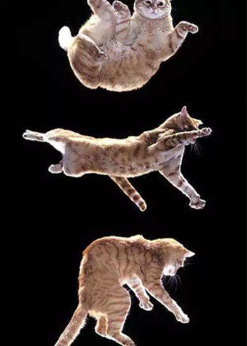 图 | Falling cat problem(来源:Fine Art American)