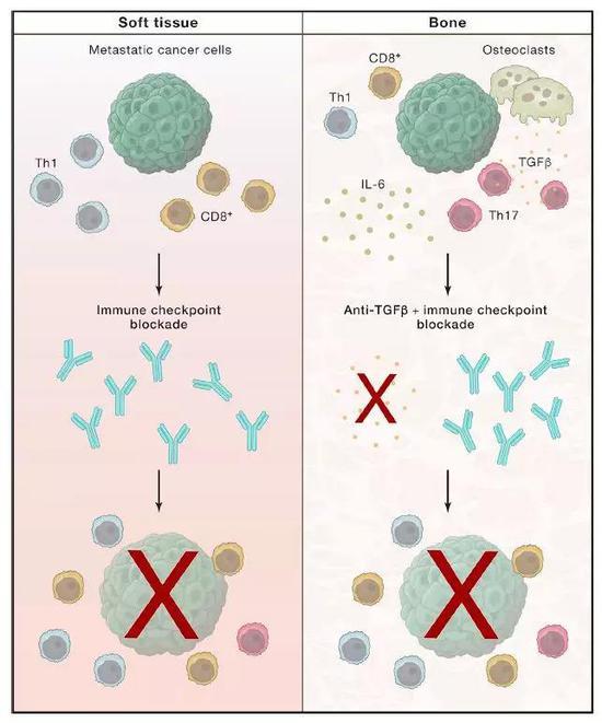 ▲在特定情況下,添加針對TGF-β的藥物,可以讓免疫療法更有效(圖片來源:參考資料[2])