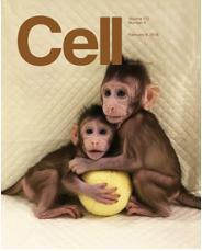 """克隆猴""""中中""""和""""华华"""",来自Cell杂志封面"""