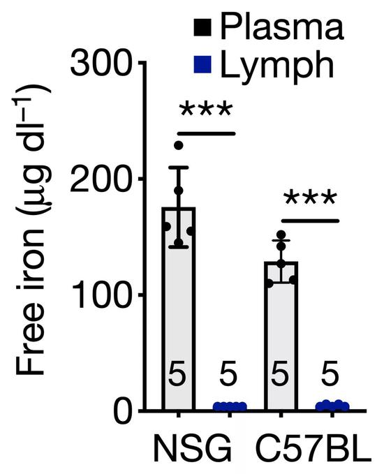 淋巴和血液铁离子的浓度差异