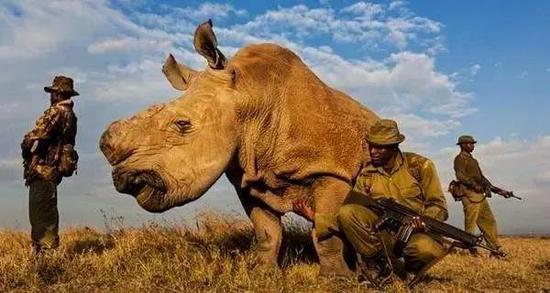地球生命力报告:全球野生动物种群数量半个世纪消亡68%