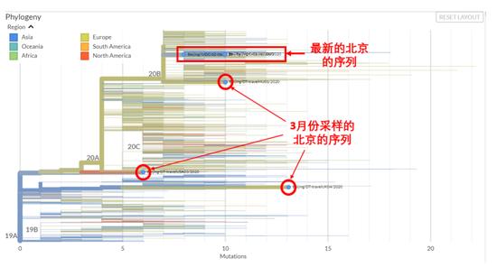 图1 全球新冠病毒家族树谱。上图以取样时间为横坐标,下图以突变的数目为横坐标。