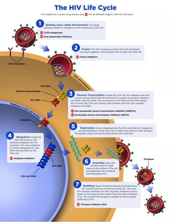 图 | HIV的生命周期
