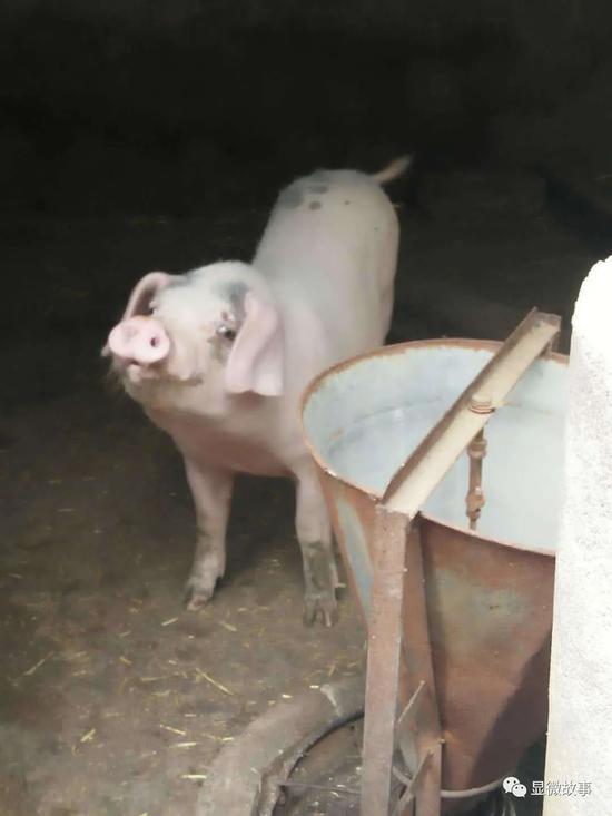 我在风口养猪:夏天点蚊香、冬天装浴霸