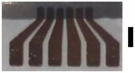 图 | 实验中使用的电极,深灰色区域附有金银混合物薄片,薄片有 100nm 厚,黑色的长条长度为 3mm(来源:此次论文)