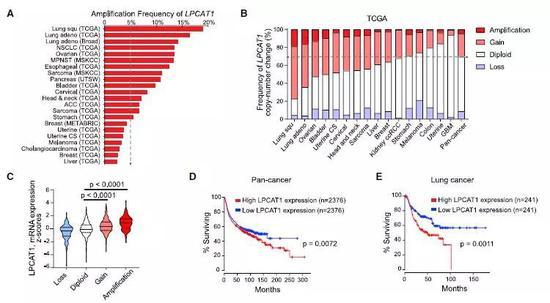 ▲在包含1萬多例患者的數據庫,30多種癌癥類型的樣本中發現了LPCAT1與生長因子通路基因的基因組變化(圖片來源:參考資料[1])