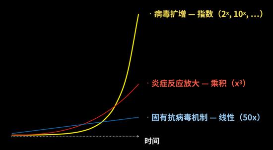 三条曲线反映了病毒扩增和两道防线的反应速度的比较。