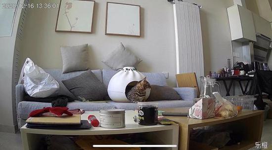 远程监控中看到的猫咪。 受访者供图