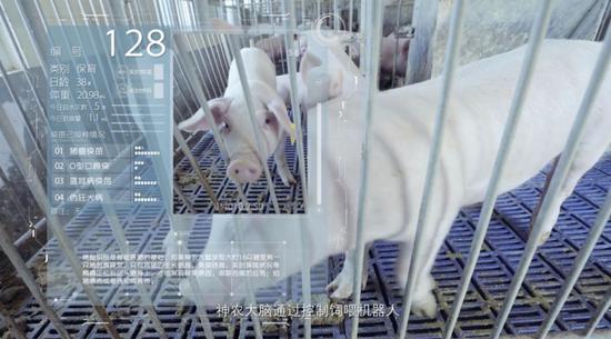 图注:京东数科自立研发的农业级摄像头,可精准识别每一头猪,掌握其详细滋长新闻
