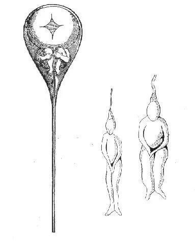 尼古拉斯・哈特索克认为,精子中住着一个个小人。(来源:wikipedia)