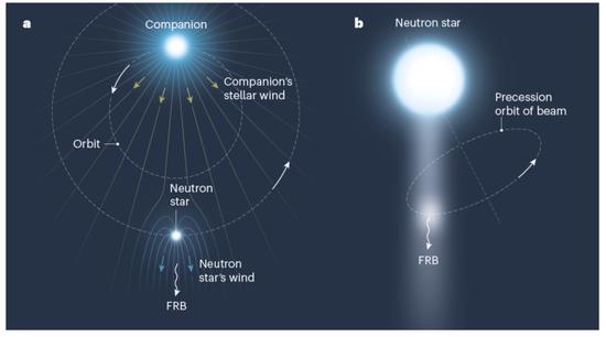 圖4:周期性FRB的兩種圖像,圖片來源:引自Zhang 2020。(a)中子星雙星系統;中子星(Neutron star)的星風將掃開大質量伴星星風的拋射物質,形成一個射電透明的觀測窗口,使FRB得以逃脫。隨著雙星系統的運動,這個射電窗口掃過地球視線的周期即為雙星系統的軌道周期。(b)中子星的進動;中子星的射電輻射束非常窄。當具有一定橢率的中子星自由進動或者受外界影響受迫進動時,其輻射束以進動周期等間隔性地掃過地球視線方向。