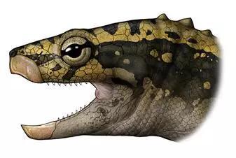 始喙龟头部回复复兴图。画图:陈瑜,来源:中国科学院古脊椎动物与古人类研讨所