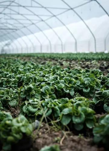 谁清新这些菜是由什么水浇灌长成的?图片来源:Daniel Fazio, Unsplash