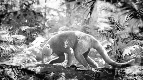 浣熊大小的Loxolophus和其他哺乳动物在白垩纪末期大灭绝后的进化快得出奇。图片来源:HHMI TANGLED BANK STUDIOS