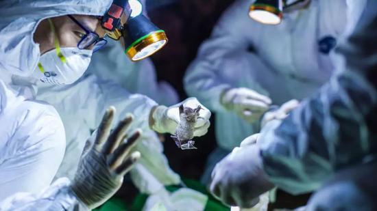蝙蝠身上的冠状病毒极有能够再次引发新的冠状病毒疫情 | ECOHEALTH ALLIANCE