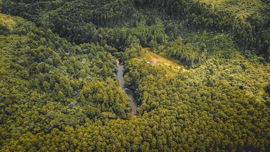 巴西的一片森林。图片来源:unsplash