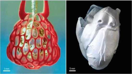 """▲生物打印技术模拟肺组织和复制人类心脏结构,让复杂的""""人造器官""""正在变成现实(图片来源:参考资料[2])"""