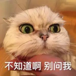图片来源:微博@树上的肥猫哇