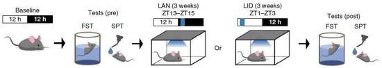 ▲实验设计示意图:实验组的小鼠在夜间增加蓝光照射(LAN),然后观察它们的行为变化(图片来源:参考资料[1])