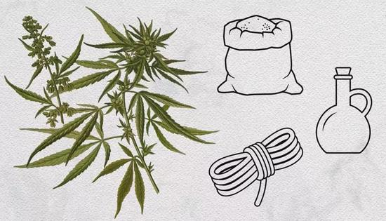 大麻及其经济用途(图片来源:Science News)