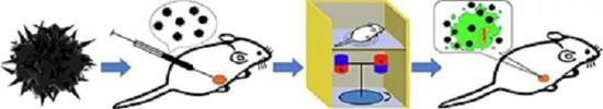 旋转磁场诱导UNNPs产生死板力按捺肿瘤滋长的机理暗示图