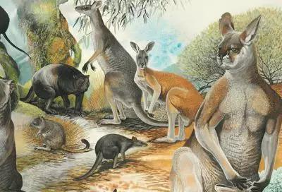 近3米高的史上最大袋鼠——已灭绝的巨型短面袋鼠(Procoptodon goliah),和它同样已灭绝的袋鼠朋友们(图片来源:https://www.australiangeographic.com.au/blogs/austropalaeo/2015/12/fossil-factfile-procoptodon/)