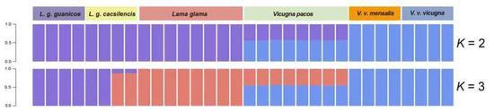 图3 遗传结构分析