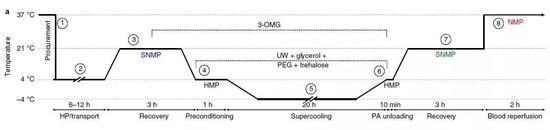 ▲离体保存人体肝脏的流程,按不同温度分为8步(图片来源:参考资料[1])