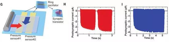 图 | 人造传入神经系统识别物体运动方向,一个杆状物体以不同的移动方向(红色和蓝色箭头)通过两个压力传感器分支,突触晶体管的突触后电流会输出对应于移动方向的不同波形,从而识别出物体的运动方向