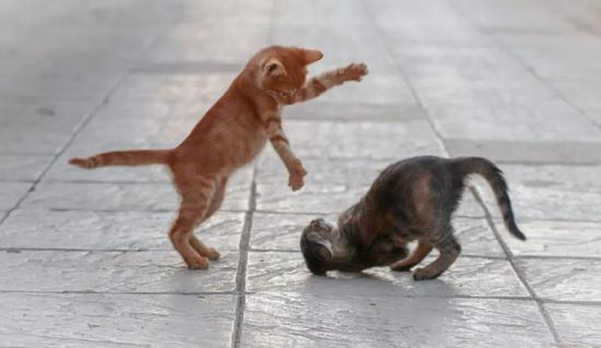 ▲来啊!互相伤害啊!(图片来源:Pixabay)