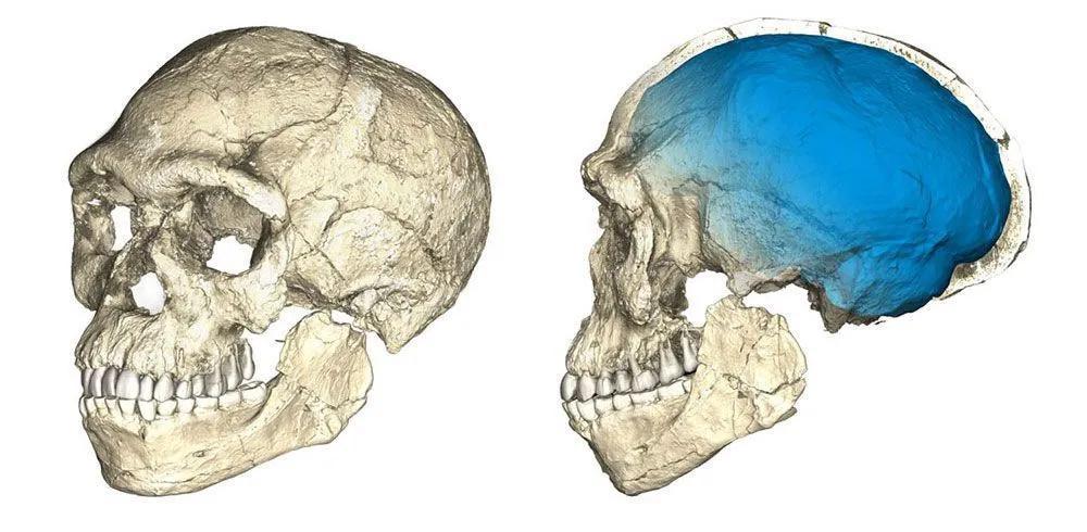对耶贝伊尔胡德发现的已知最早智人化石进行复合重建的视图