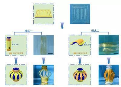 """图4 片状水凝胶经由过程两栽变形模式均可变成 """"灯笼"""""""