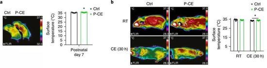 图3 P-CE代表受过寒冷刺激的鼠爸爸的后代,暴露于寒冷环境30h后,体表温度依旧很高(因为体内产热器褐色脂肪含量更高)。图片来源:参考文献3。