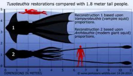 晚白垩纪巨大的幽灵蛸(1,2为旧复原)托斯特巨蛸与1.8米人类的对比。它们也曾经阔过。相比之下,现代幽灵蛸只能长到25cm左右。图片来源:Prehistoric Wildlife
