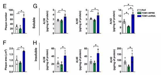 ▲TOM1的水平(绿色:过表达;蓝色:RNA干扰抑制)会影响β-淀粉样蛋白的多寡(图片来源:参考资料[1])
