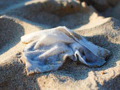 沙滩上的湿巾 图   Marine Conservation Society
